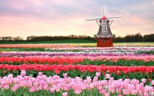 HOLANDIA – AMSTERDAM + FESTIWAL TULIPANÓW W KEUKENHOF