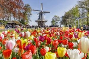 Holandia + Ogrody Keukenhof